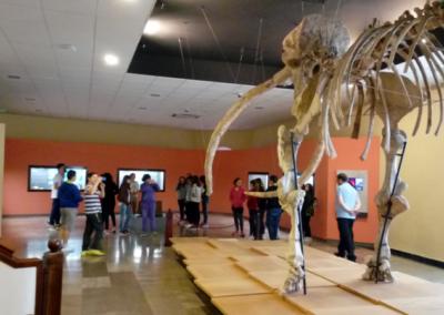 iesmaestre-museo-provincialcr-1-2018