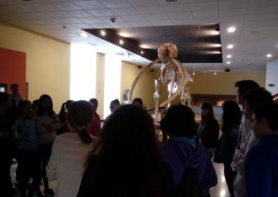 iesmaestre-museo-provincialcr-4-2018